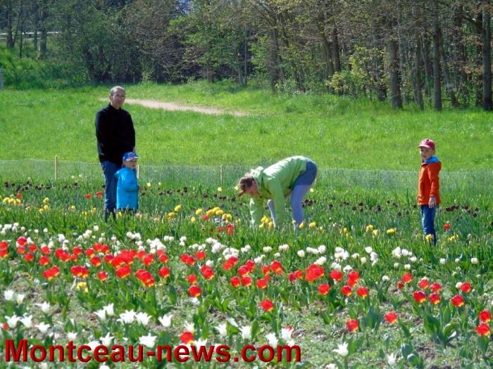tulipe 19041512