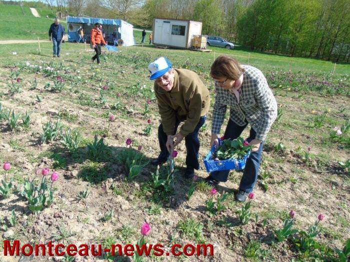 tulipe 19041514