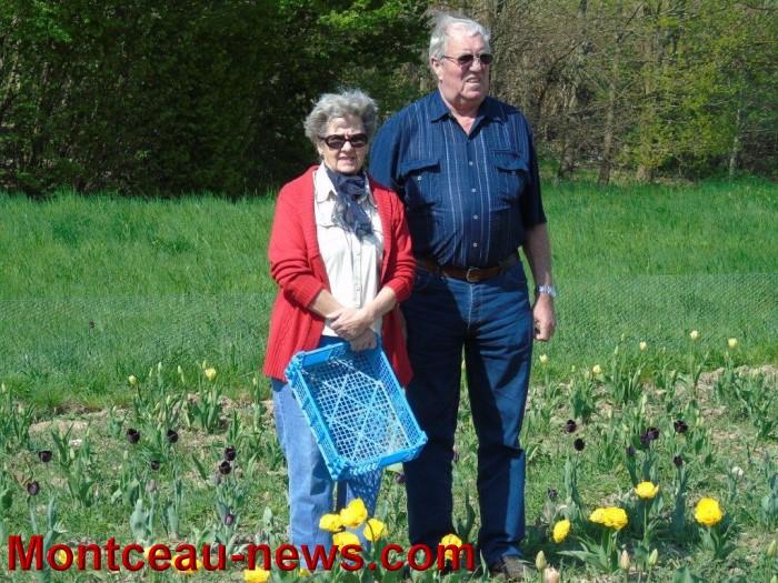 tulipe 1904154
