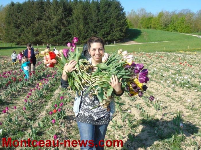 tulipes 24041510