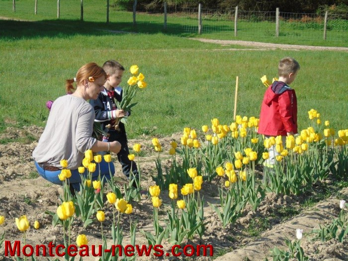 tulipes 24041511