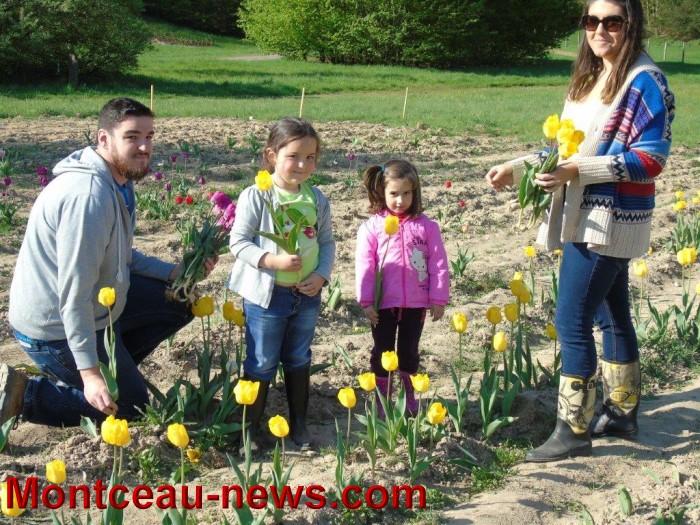 tulipes 24041512