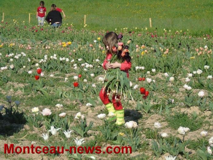 tulipes 24041513