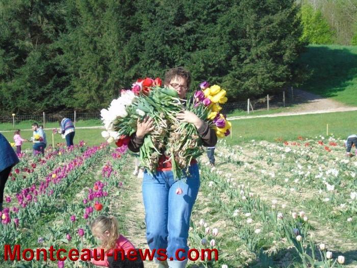 tulipes 24041514