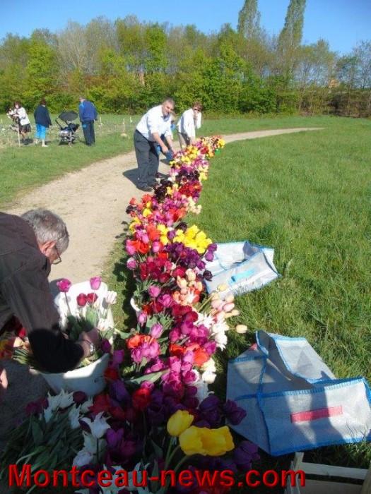 tulipes 24041516