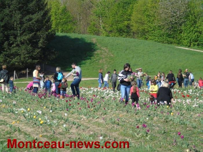 tulipes 24041517