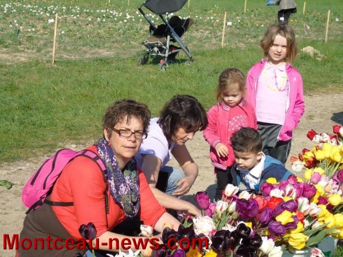 tulipes 24041518