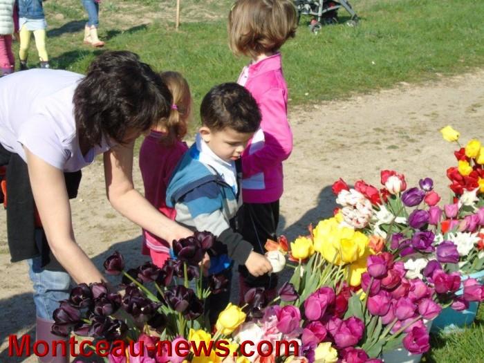 tulipes 24041519
