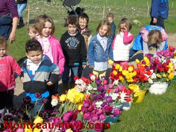 tulipes 24041520