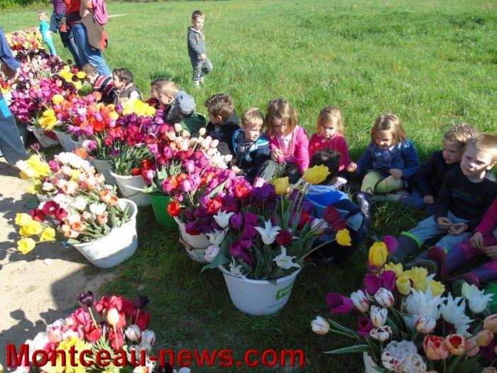 tulipes 24041521