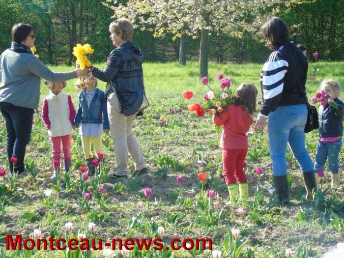 tulipes 2404153