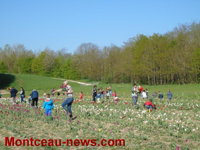 tulipes 2404155