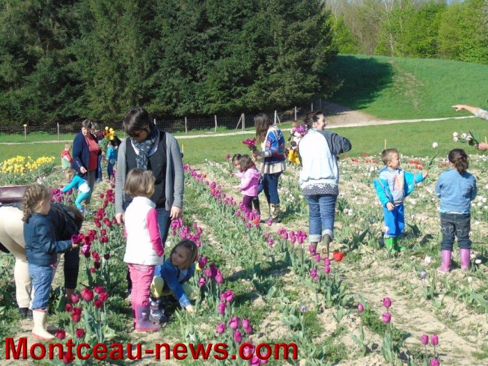 tulipes 2404158