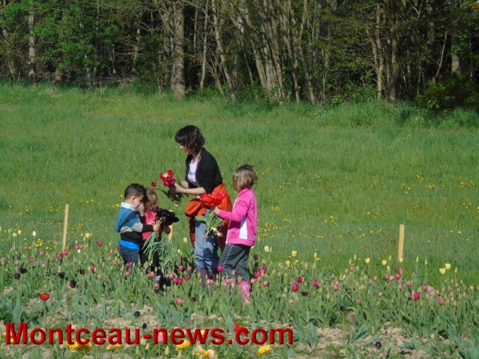 tulipes 2404159
