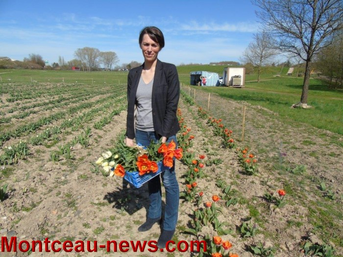 tulipes lions 1104152