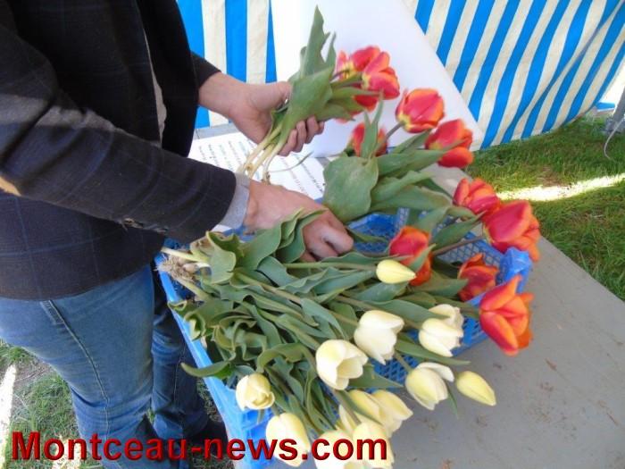 tulipes lions 1104155