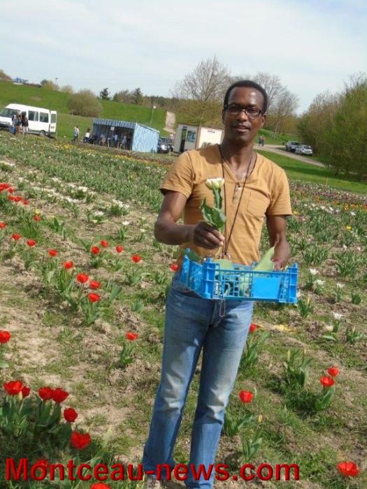 tulipes lions 1604155