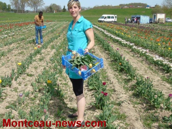 tulipes lions 1604156