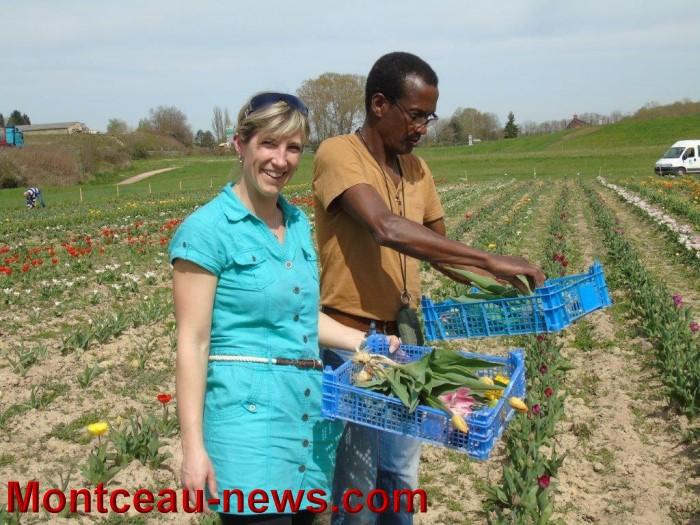 tulipes lions 1604157
