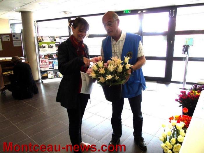 web tulipes 1704153