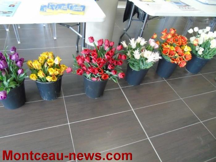 web tulipes 1704155