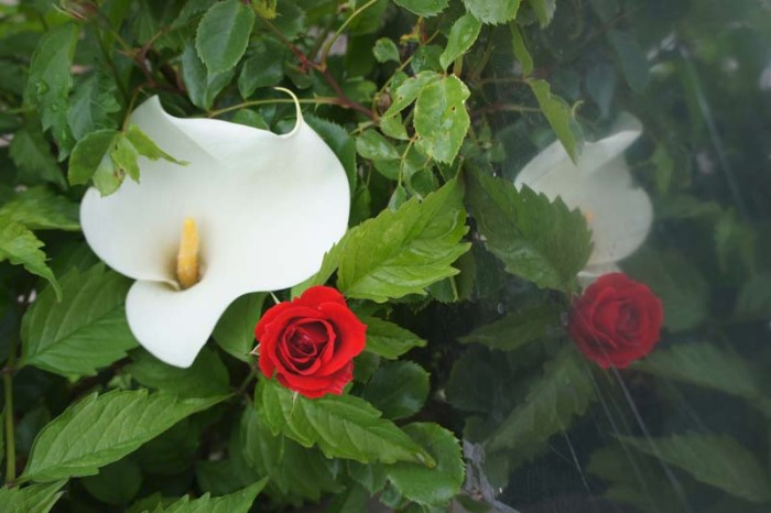 fleurs bernard 2505152