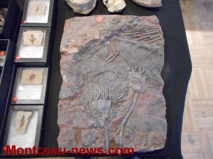 pierre expo 17051522