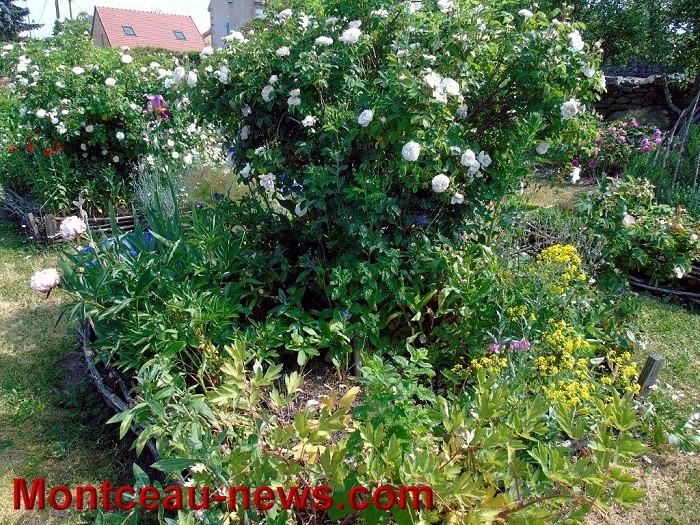 jardin 07 06 1510