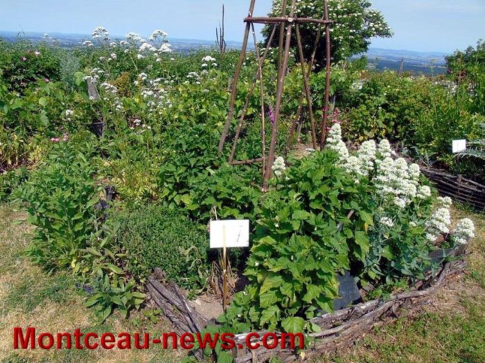 jardin 07 06 1514