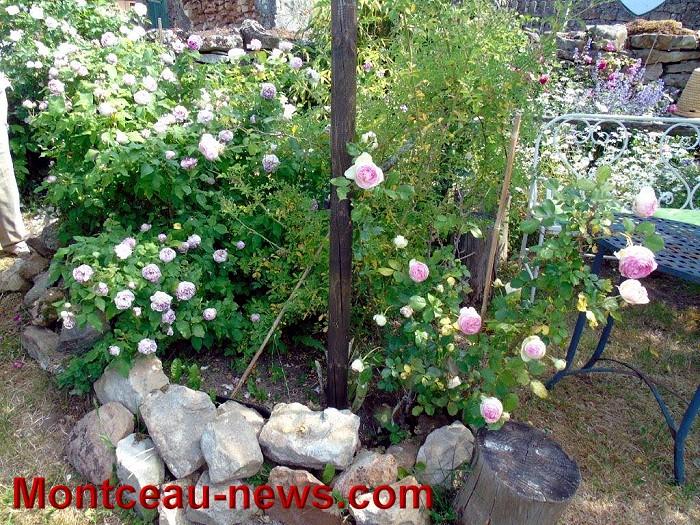 jardin 07 06 152