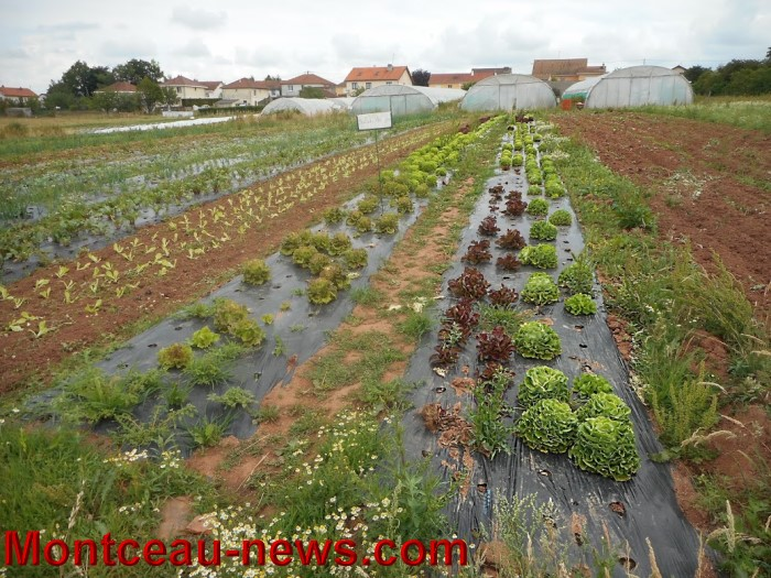 jardin st berain 15061510