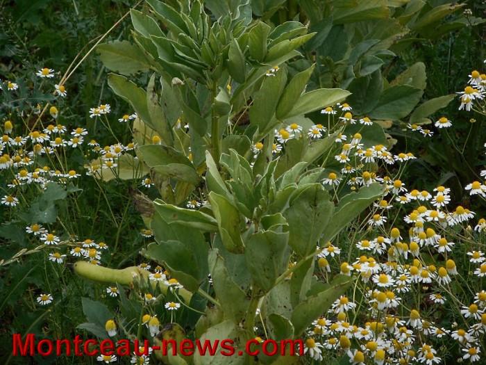 jardin st berain 1506158