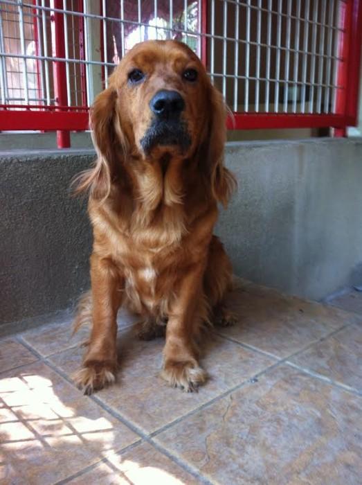 chien spa 0207152