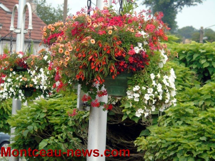 fleurs blanzy 23071518