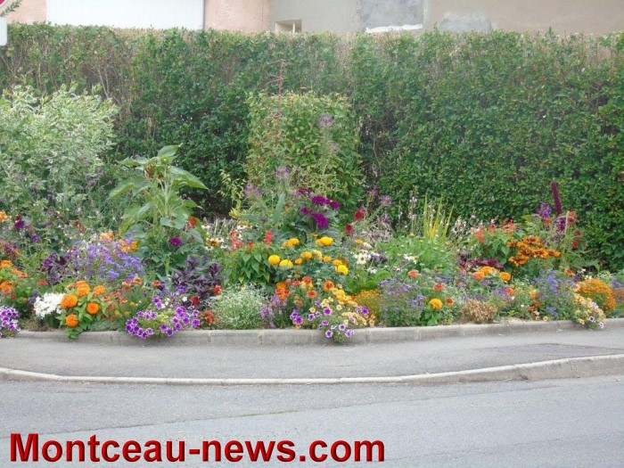 fleurs blanzy 2307152