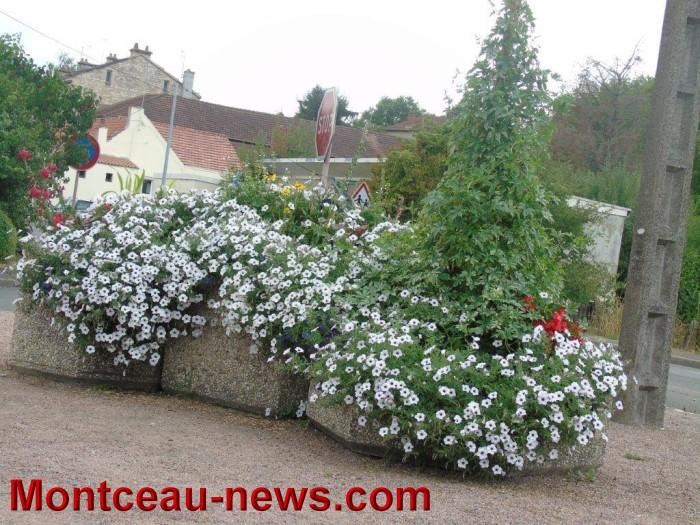 fleurs blanzy 23071521
