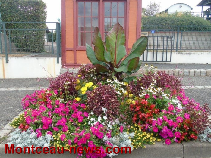 fleurs blanzy 2307154