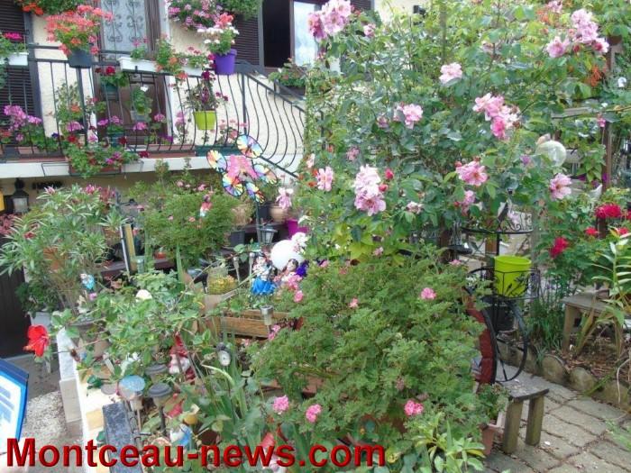 fleurs mont 24071519