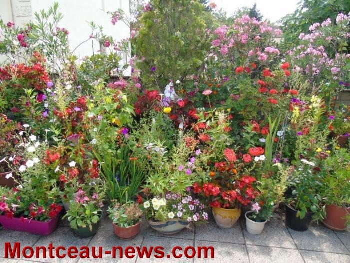 fleurs mont 24071523