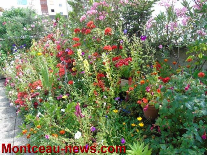 fleurs mont 24071524
