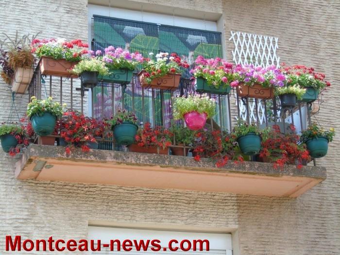 fleurs mont 24071525