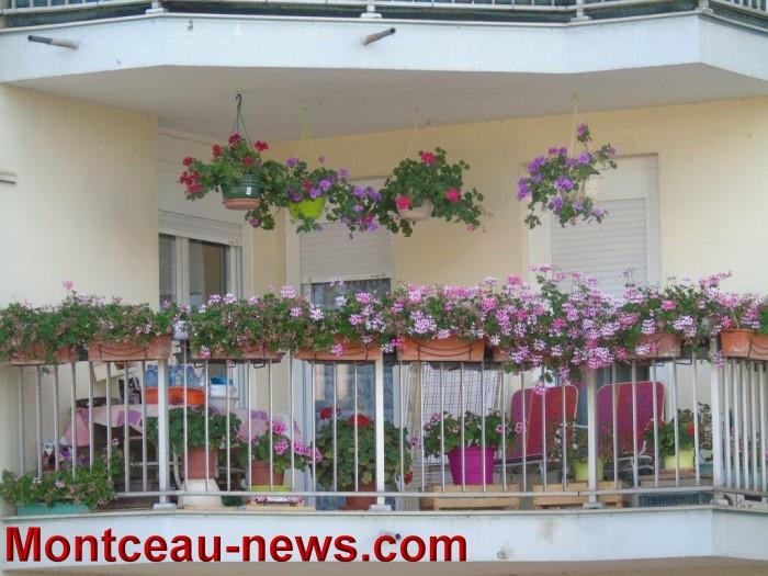 fleurs mont 24071527