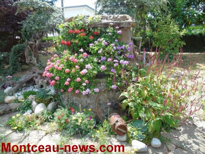 fleurs mont 24071532