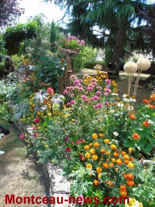 fleurs mont 24071533