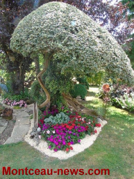 fleurs mont 24071534
