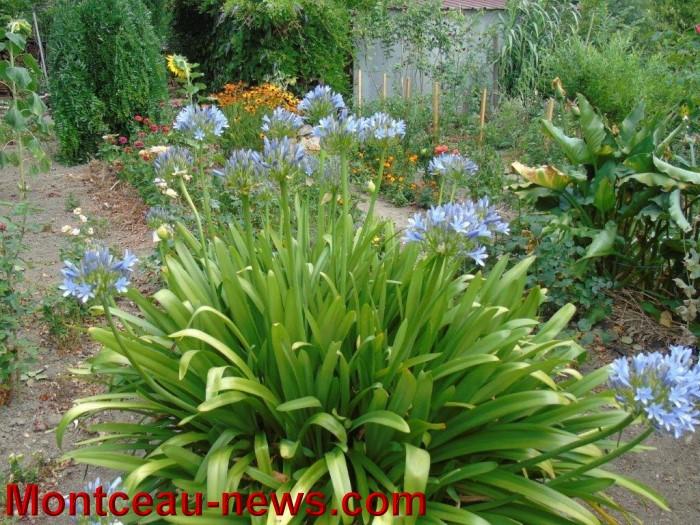fleurs mont 24071540