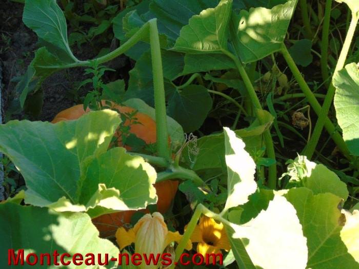 jardin 25071511