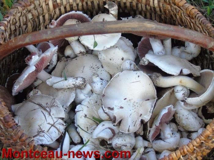 champignon 2208152