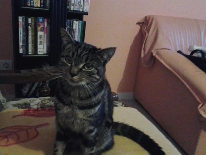 chat perdu 2008152