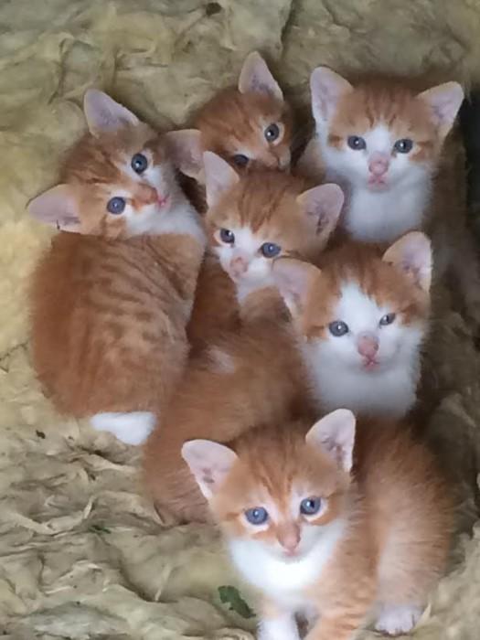 chatons 1608152